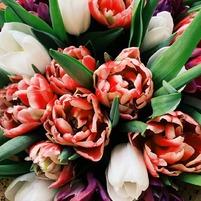 🌈 Bon dimanche à tous ! #dimanche #weekend #beautiful #beautemps#flowers
